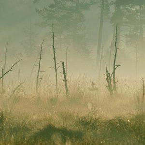 Mgły na torfowisku