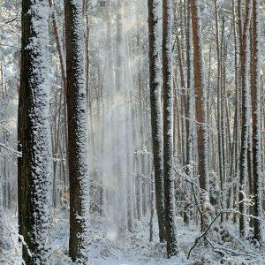 Zima w borze